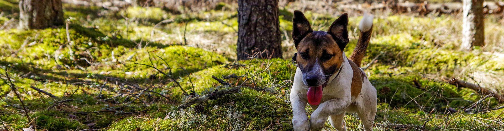 Trimtechnieken-hond-img-1